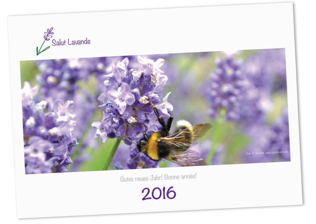 Salut Lavande Kalender 2016